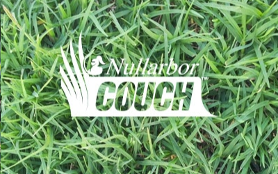 Nullarbor%20Couch%20Turf.png